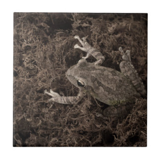 frog left on moss sepia tone small square tile
