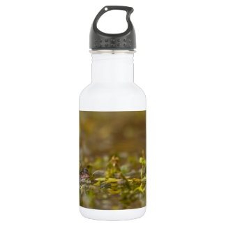 Frog Liberty Water Bottle