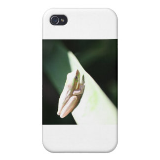 Frog Life iPhone 4 Case