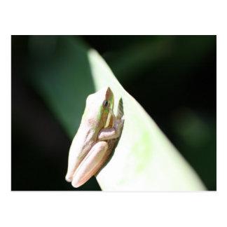 Frog Life Postcard