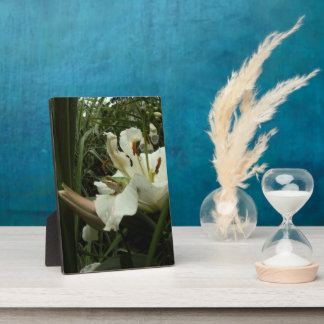 Frog & Lily Display Plaques