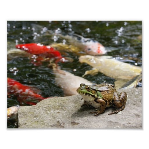 Frog-n-Fish 10 x 8 Photographic Print