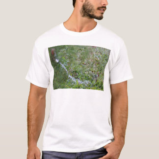 FROG NEAR WATER AND DRAIN PIPE RURAL AUSTRALIA T-Shirt