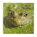 Frog on a ceramic tile