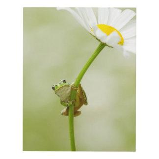 Frog On A Daisy Panel Wall Art