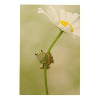Frog On A Daisy Wood Print