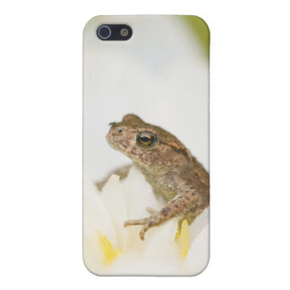 Frog on a Flower iPhone 4Case iPhone SE/5/5s Cover