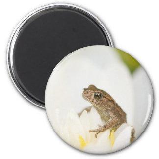 Frog on a Flower Magnet