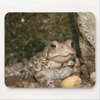 Frog on a pad! mouse mat