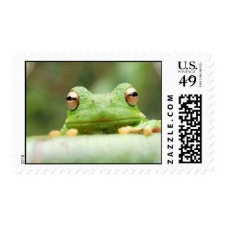 Frog on a Postage Stamp