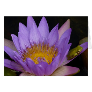 frog on a water lily greeting card