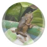 Frog On Back Plate