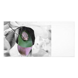 Frog on circle green leaf bw cutout custom photo card