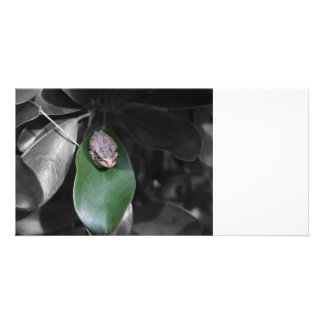 Frog on green leaf bw photo cards