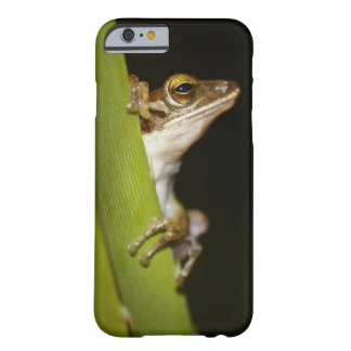 Frog on leaf in profile barely there iPhone 6 case