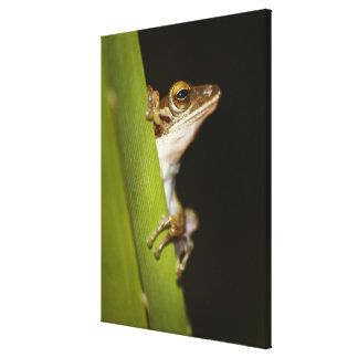 Frog on leaf in profile canvas print