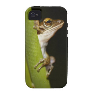 Frog on leaf in profile Case-Mate iPhone 4 cover