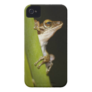 Frog on leaf in profile iPhone 4 Case-Mate cases