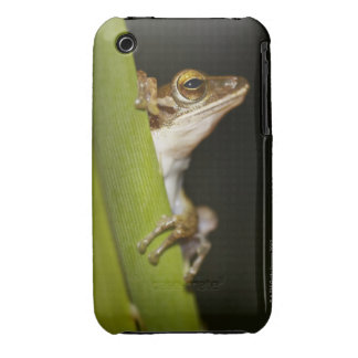 Frog on leaf in profile iPhone 3 cover