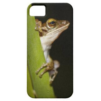 Frog on leaf in profile iPhone SE/5/5s case