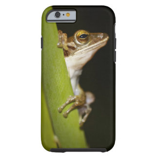 Frog on leaf in profile tough iPhone 6 case