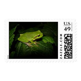 Frog on leaf stamp