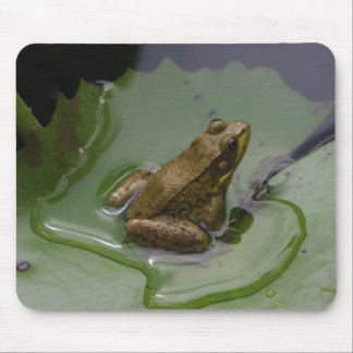Frog on Lily Pad Mouse Mat