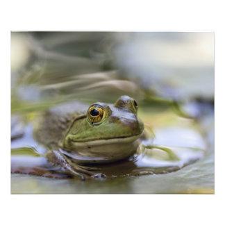 Frog on Lily Pad Photo Print