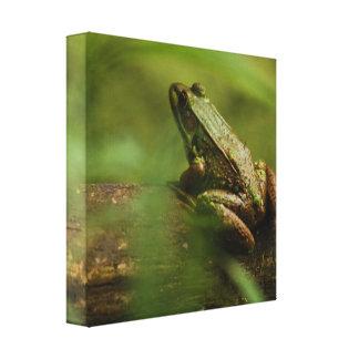 Frog on Log Canvas Print