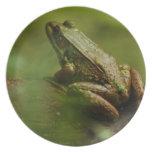 Frog on Log Plate
