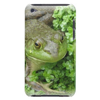 Frog on Marsh iTouch Case iPod Touch Case