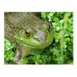 Frog on Marsh Postcard