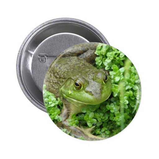 Frog on Marsh Round Button