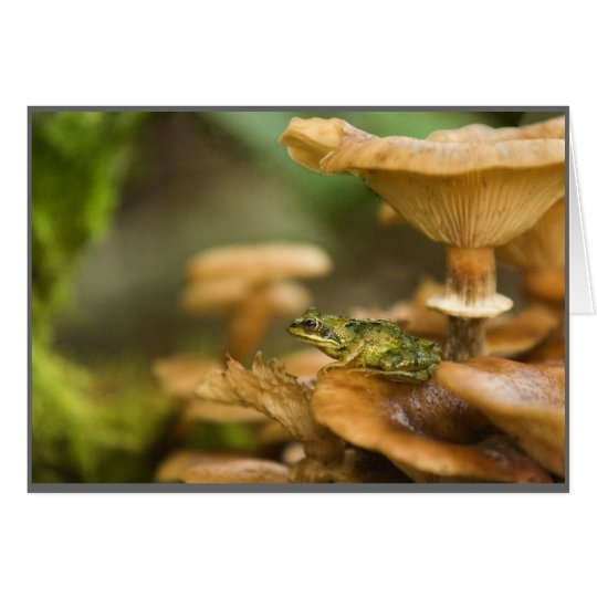 Frog on Mushrooms Card
