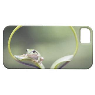 Frog on plant stem, Biei, Hokkaido, Japan iPhone 5 Covers