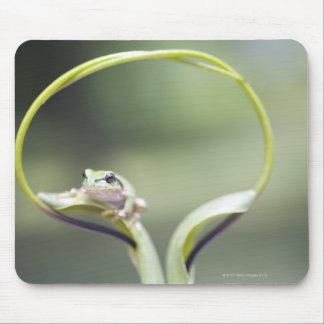 Frog on plant stem, Biei, Hokkaido, Japan Mouse Pad
