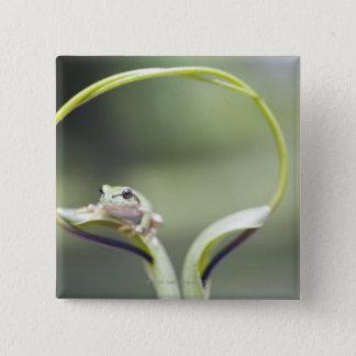 Frog on plant stem, Biei, Hokkaido, Japan Pinback Button