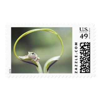 Frog on plant stem, Biei, Hokkaido, Japan Postage