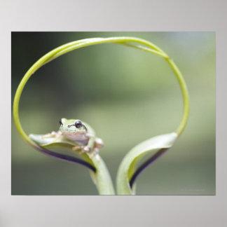 Frog on plant stem, Biei, Hokkaido, Japan Print