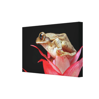 Frog on red flower beautiful photo wrapped canvas gallery wrap canvas