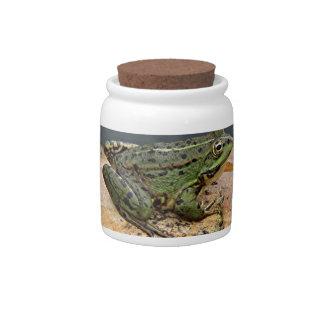 Frog on rock in pond, Arzua, Spain Candy Jars