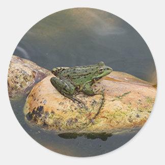 Frog on rock in pond, Arzua, Spain Classic Round Sticker