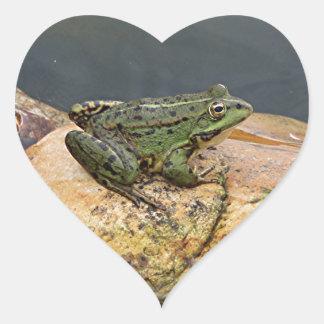 Frog on rock in pond, Arzua, Spain Heart Sticker