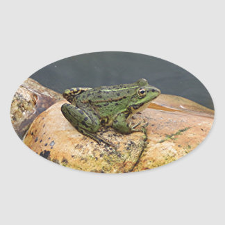 Frog on rock in pond, Arzua, Spain Oval Sticker
