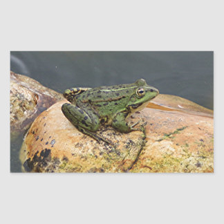 Frog on rock in pond, Arzua, Spain Rectangular Sticker