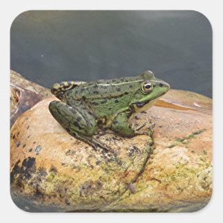 Frog on rock in pond, Arzua, Spain Square Sticker