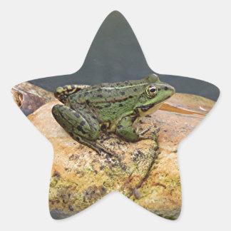 Frog on rock in pond, Arzua, Spain Star Sticker