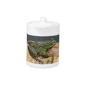 Frog on rock in pond, Arzua, Spain