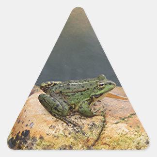 Frog on rock in pond, Arzua, Spain Triangle Sticker