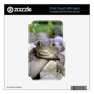 Frog on the Rocks iPod Touch (4th Gen) Skin iPod Touch 4G Decal